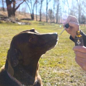 Hemp Oil Tincture For Pets