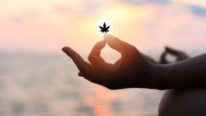Combining Cannabis, Psychedelics, and Meditation for Overall Health and Wellness