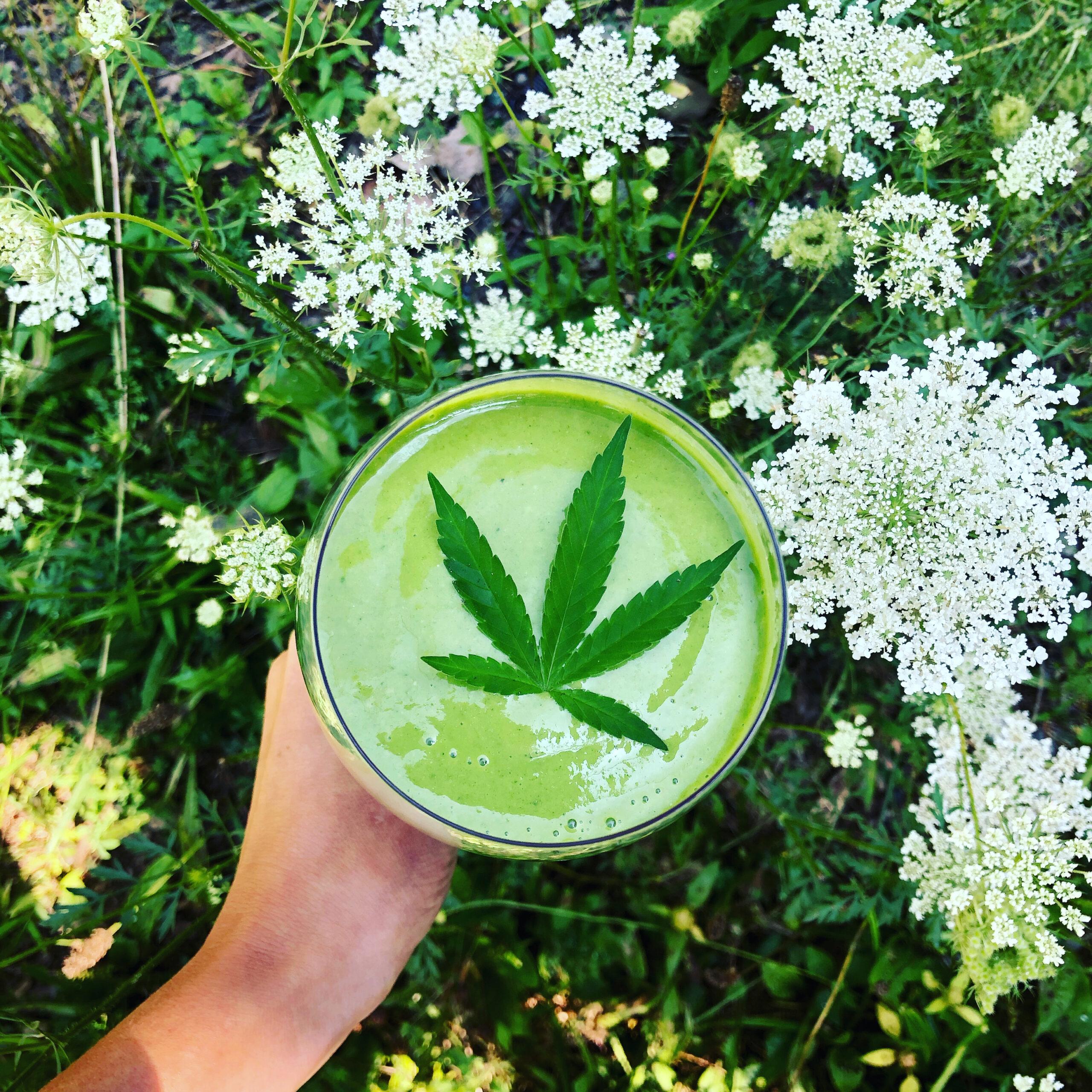 Cannabis Smoothie