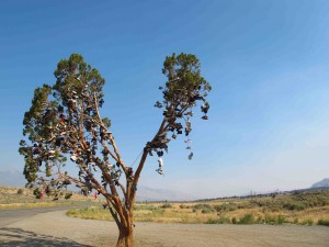 California Shoe Tree sm