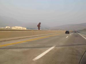 Carson City Valley of Eagles sm