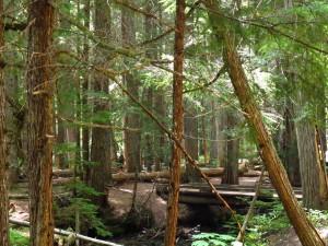aIMG_0957 Cedar Grove