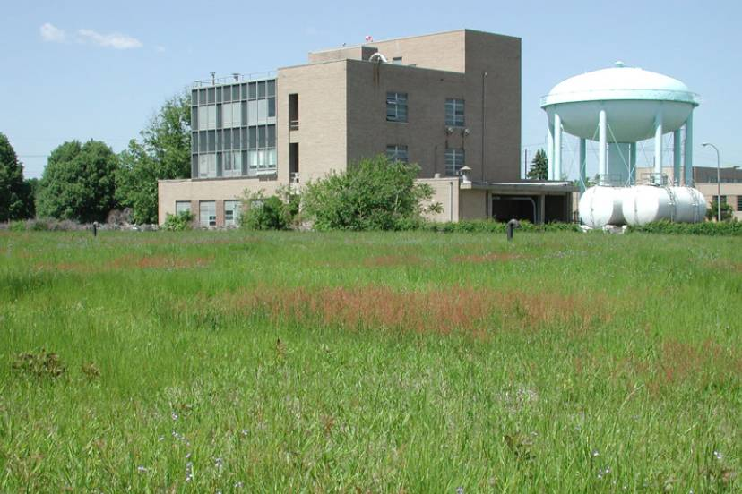 Baxter Water Treatment Plant Meadow
