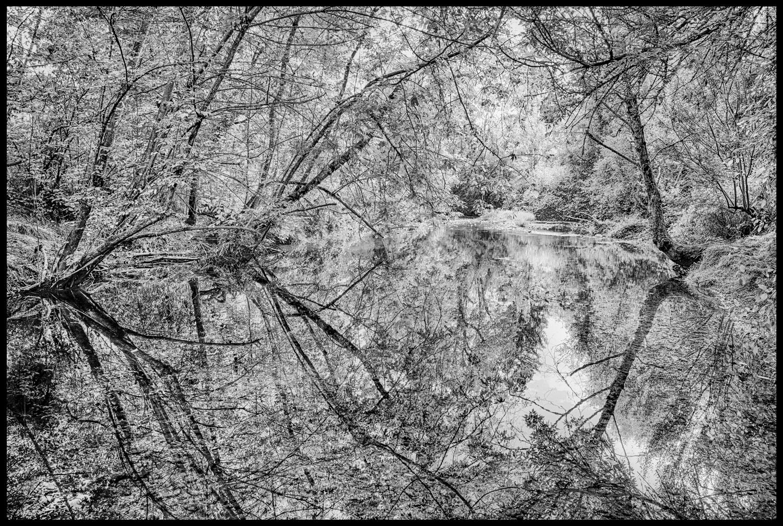 Johnson-Creek-reflection