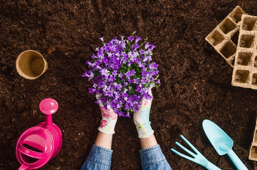 Planting a plant on garden soil
