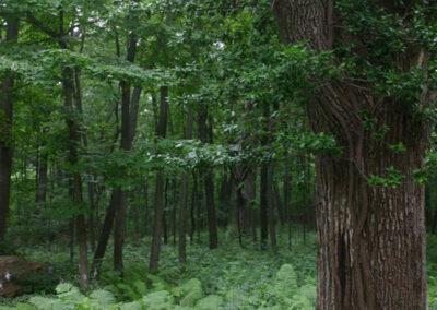 Fantastic Green woodlands
