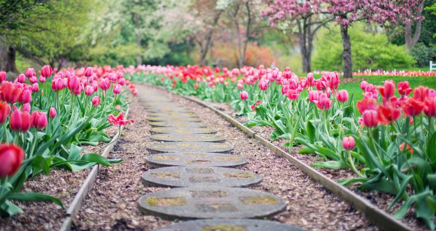 landscape-hardscape-garden-plants-flowers