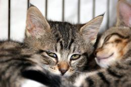 SC CAT SC CAT SC CAT