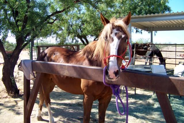 Escalante Springs Equine Rescue, Tucson