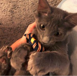 SOS Cat Rescue Tucson