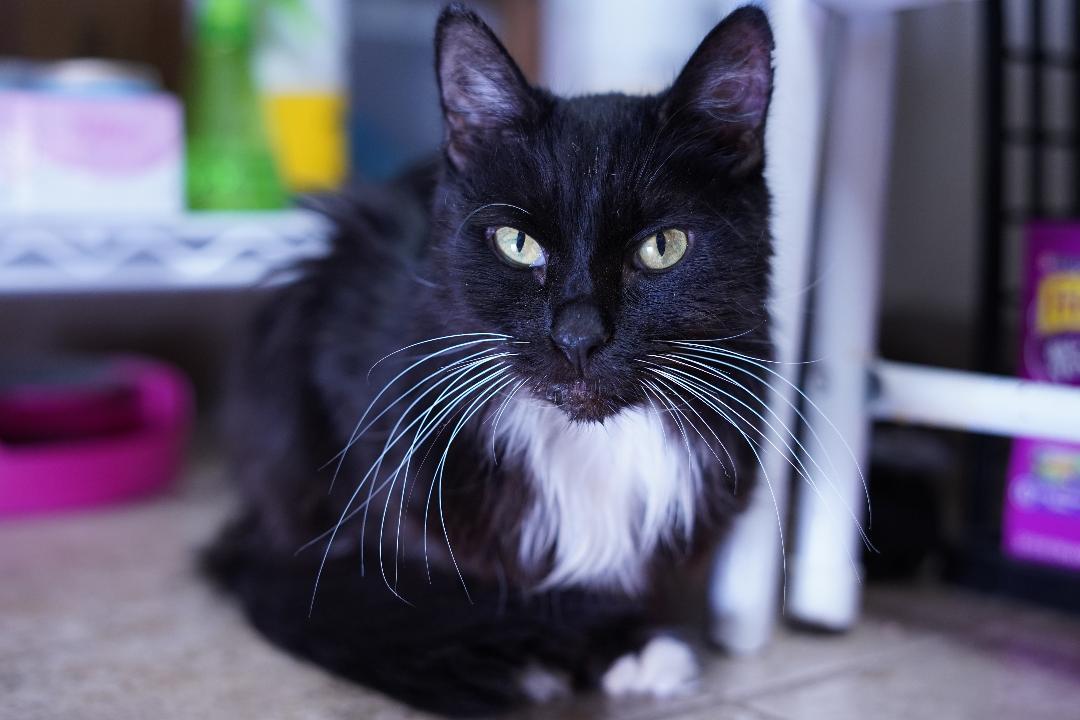 paws patrol adoptable cat