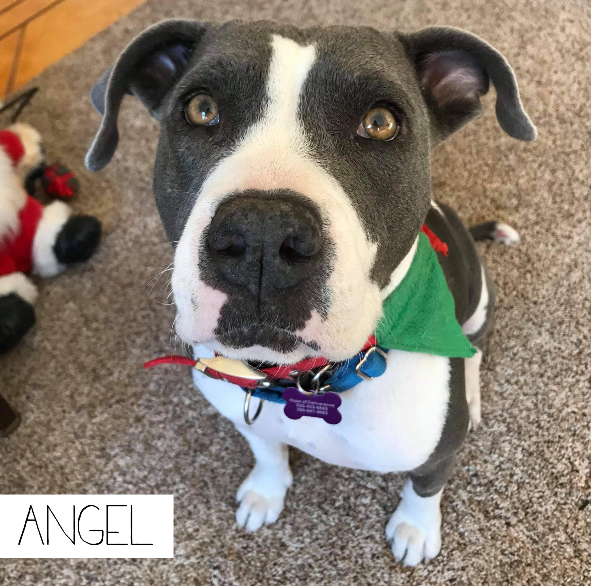 black and white mixed dog with sweet eyes