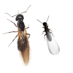 Termite and Ant side by side