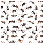 Picture of various types of ants