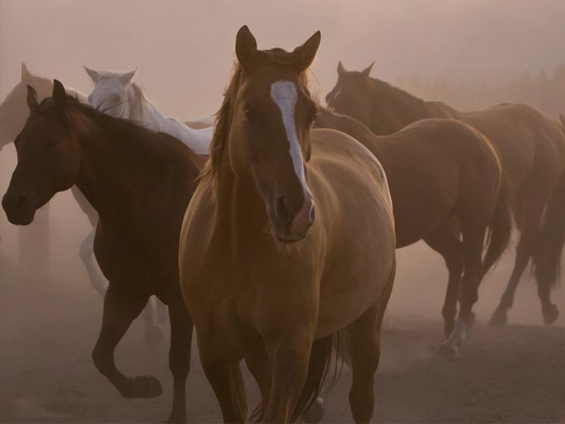 wild-horses-ranch