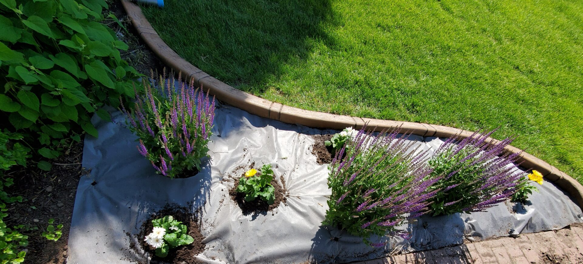 a flower garden protected by a sheet of tarpaulin