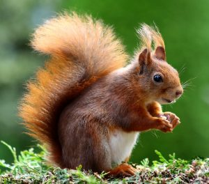 Predict If This Is A Squirrel, Image From Pixabay on Pexels.com