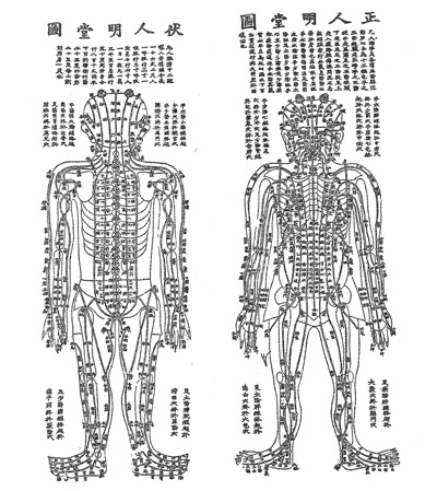 Acupuncture Meridian System