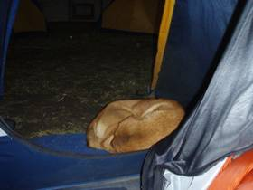 Dog-In-Tent-Namchee