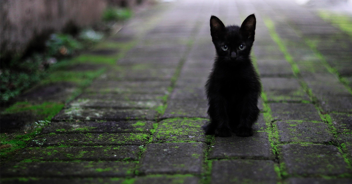 15 Facts You Never Knew About Black Cats