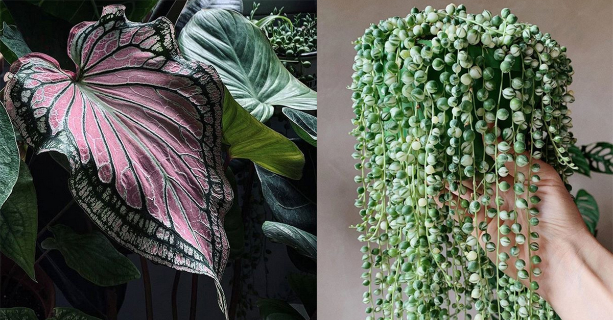 These Plant Instragrams will Inspire You to Bring the Jungle to Your Apartment