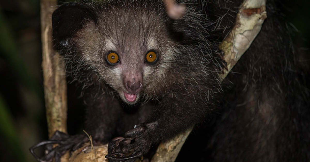 15 Creepy Animals You Didn't Need to Know Existed