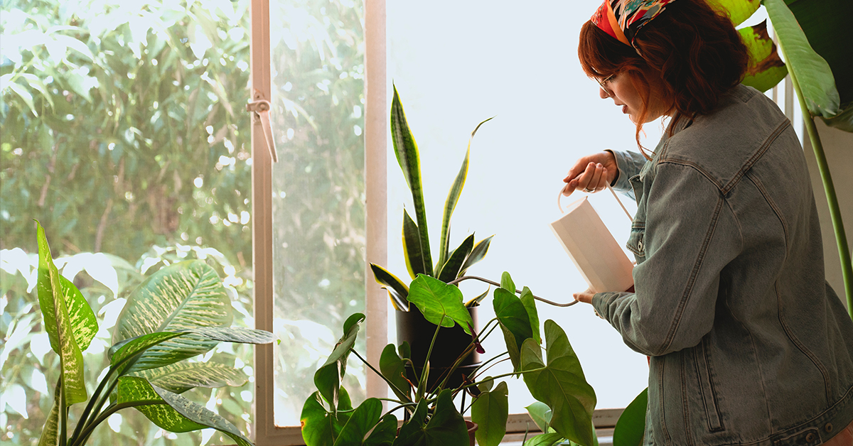 15 Low Maintenance House Plants That are Hard to Kill