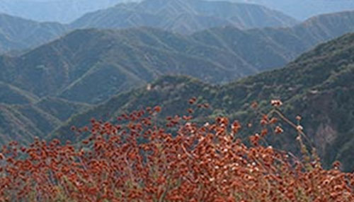 Monrovia Hillside Wilderness Preserve