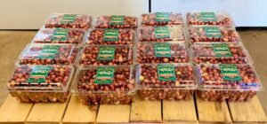 local cranberries grown in central MA