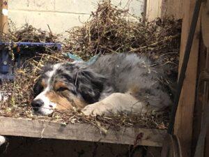 Ted, Clover Hill Farm Dog