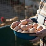 Cage-free local eggs, gmo-free poultry
