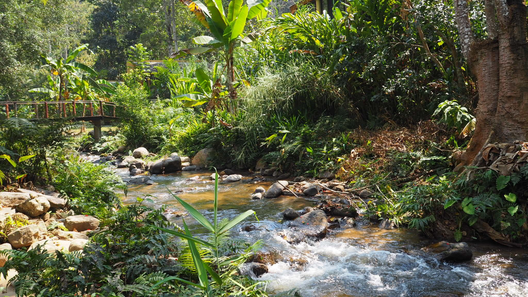 chiang mai explore nature stream