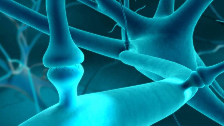 Beyond Cannabinoids: The Endocannabinoid System