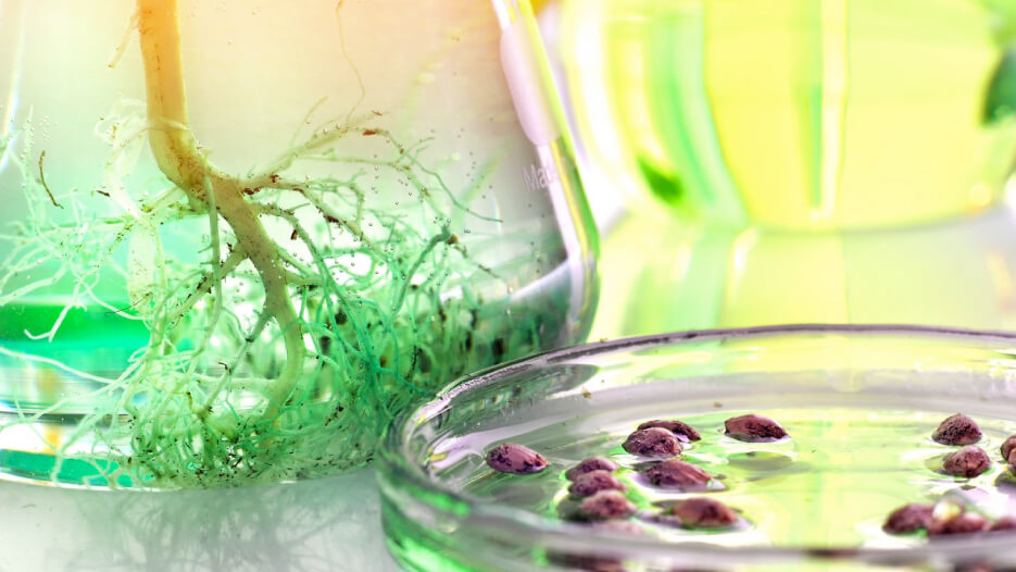 Budding Yeast Produce Cannabis Compounds