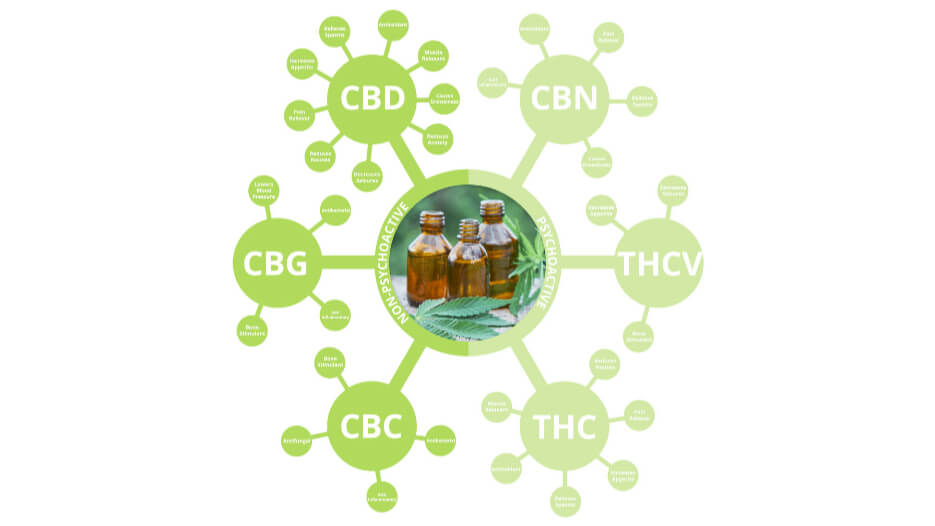 Cannabinoid Fermentation Report