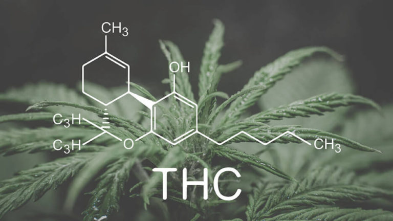 Exploring Cannabinoids: What is THC?