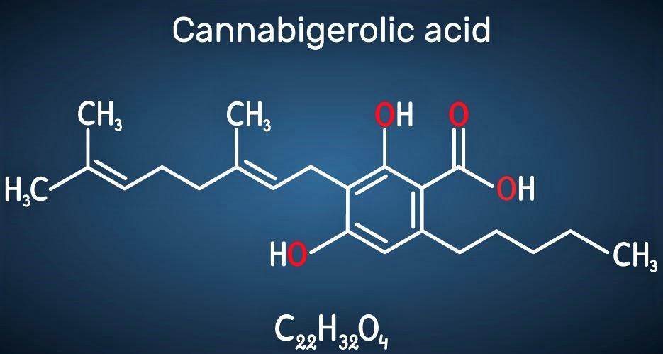 CBGA – The Mother Cannabinoid