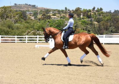 wieco extended trot
