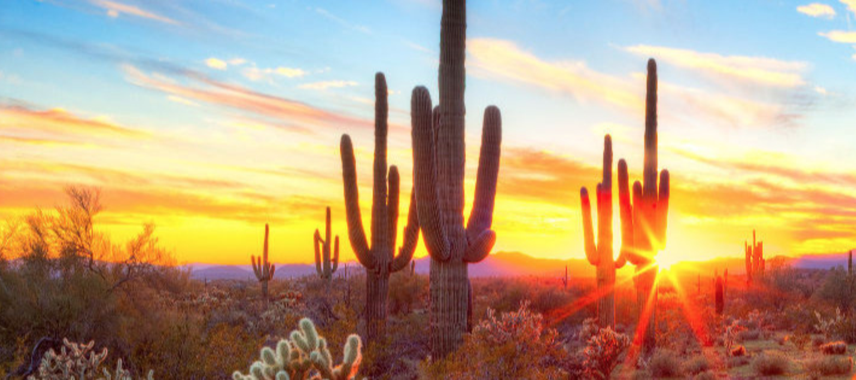 image of an arizona sunrise with saguaro cactus in the foreground