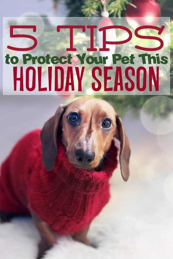 5 Tips to Protect Your Pet This Holiday Season