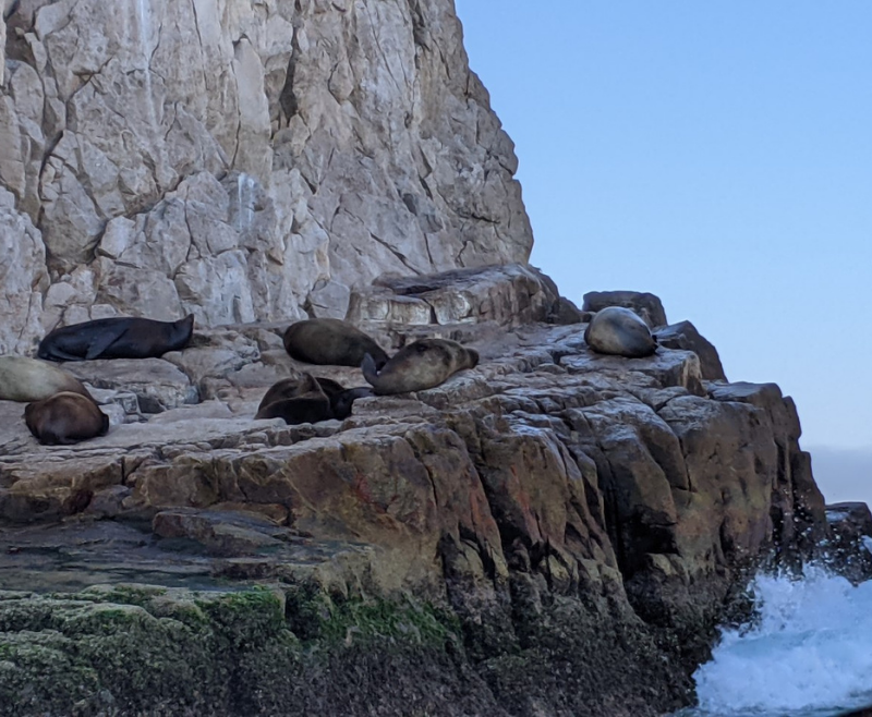 Cabo sunbathing seals