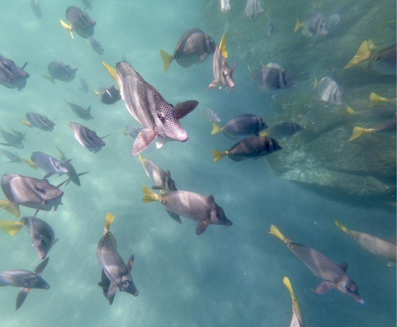 Cabo Fish