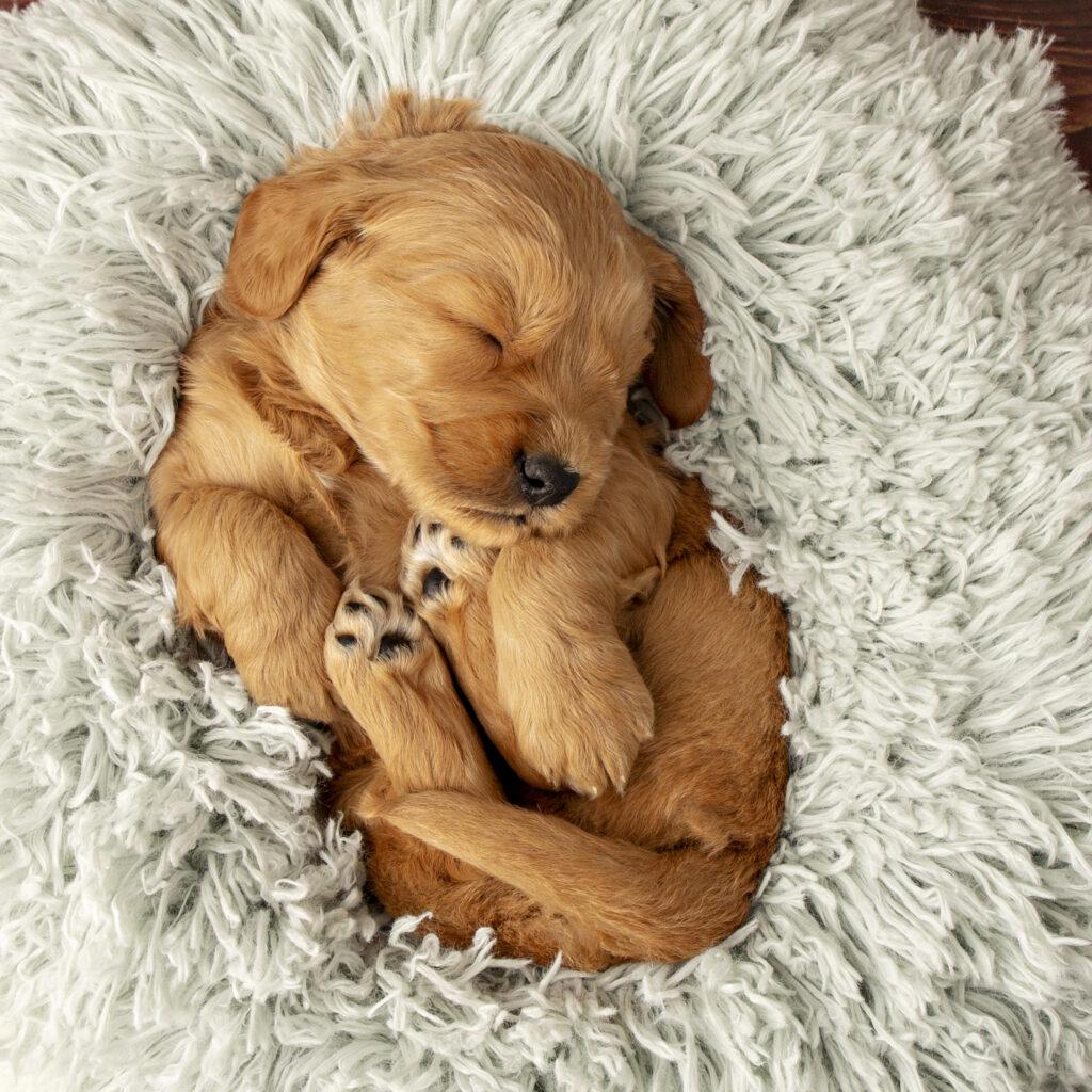 Puppy Rodney