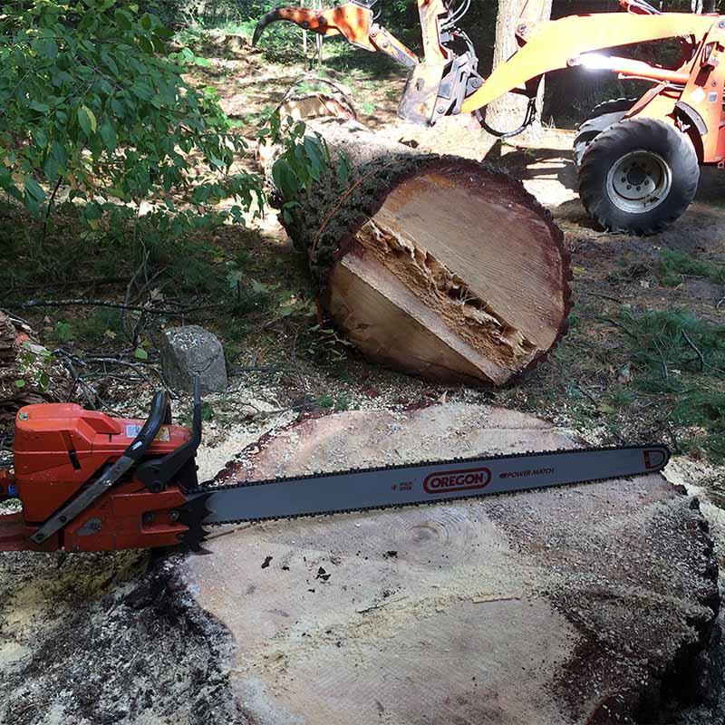 Tree Removal Traverse City