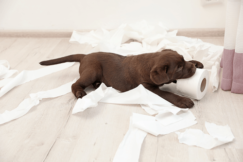 4 Ways Your KPIs Remind Me of Our New Puppy