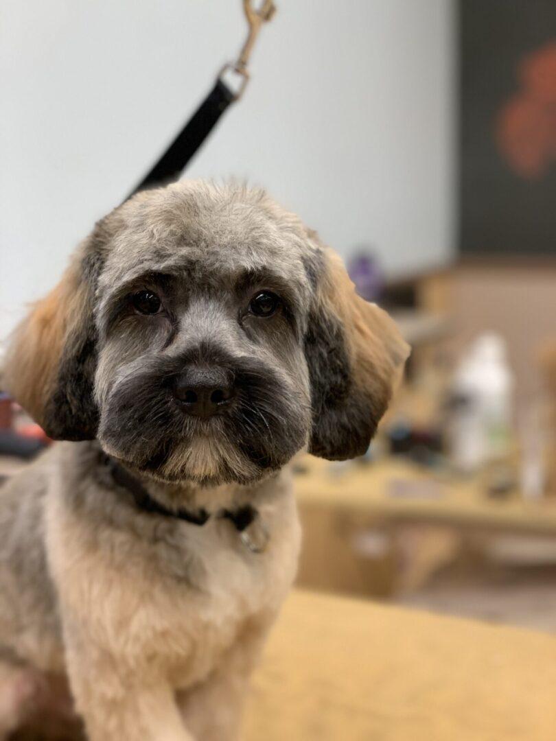 a small brown dog looking at the camera