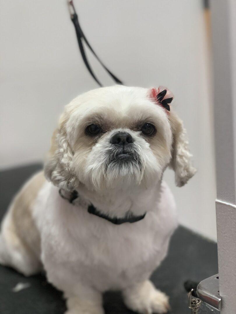 a white small dog