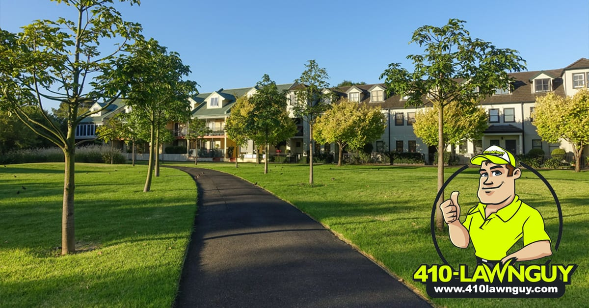commercial lawn care 410lawnguy bowie