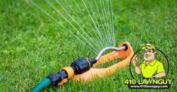 When Should I Water My Lawn