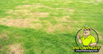 Insect Control for Your Lawn – Grubs, Worms, Spiders, Ants